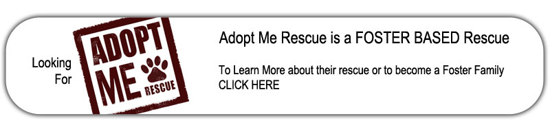 Please visit this great dog rescue, Adopt Me Rescue